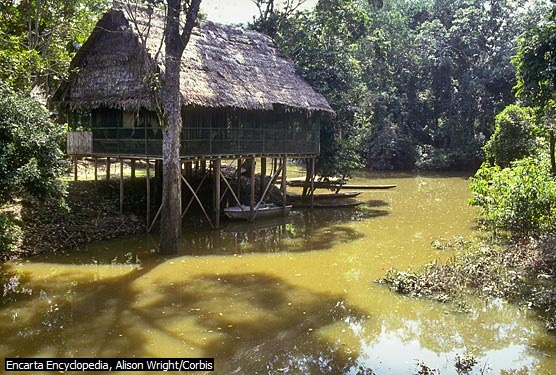 Peruvian Amazon